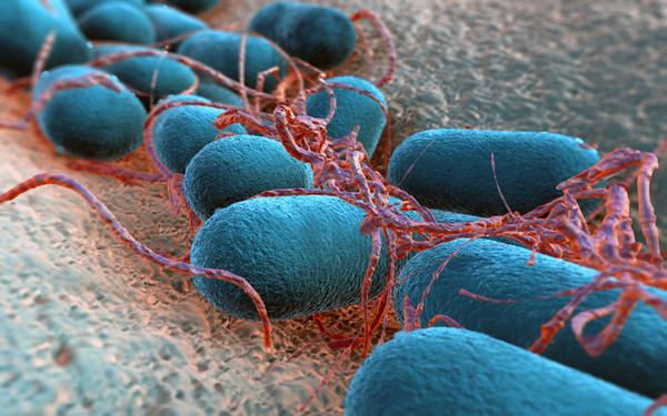 Escherichia coli Bakterium