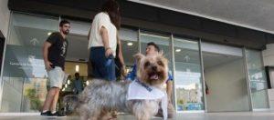 leon_dogspital